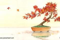 momiji-bonsai-800